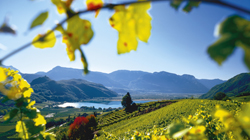 Farm Holidays in South Tyrolean Wine Road