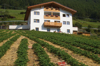 Berghof  - Martell - Farm Holidays in South Tyrol  - Vinschgau