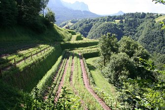 Pflegerhof - Seis  - Kastelruth - Farm Holidays in South Tyrol  - Dolomiten