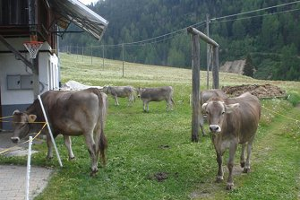 Innerkapron - Langtaufers  - Graun im Vinschgau - Farm Holidays in South Tyrol  - Vinschgau