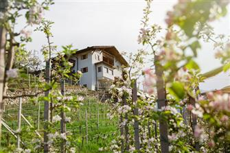 Schwarzielhof  - Feldthurns - Farm Holidays in South Tyrol  - Eisacktal