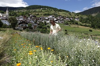 Stilfser Bergkräuter  - Stilfs - Farm Holidays in South Tyrol  - Vinschgau