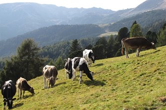 Telfnerhof  - Klausen - Farm Holidays in South Tyrol  - Eisacktal
