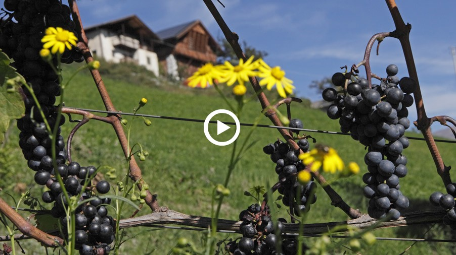 Video: Dream destination fruit and wine farm