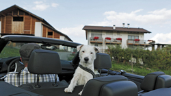 South Tyrol for four-legged friends