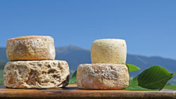 Mountain cheese from South Tyrol