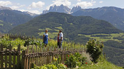 Summer holiday on a farm in South Tyrol
