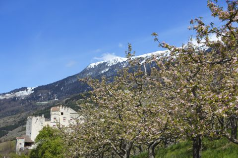 Farm Holidays in The orchards of the Vinschgau