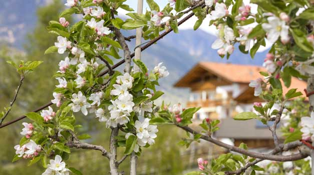 Spring holiday in South Tyrol