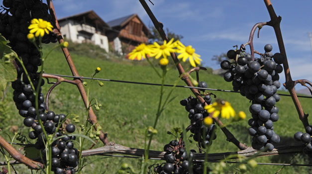 Farm holiday in autumn in South Tyrol