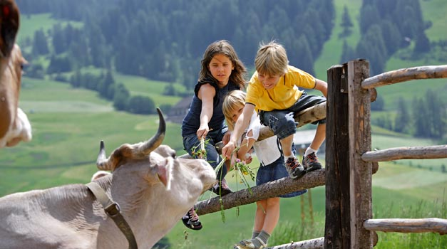 Farm holiday for children