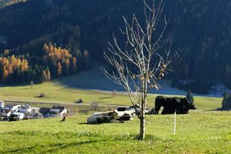Moserhof  - Prags - Farm Holidays in South Tyrol  - Dolomites