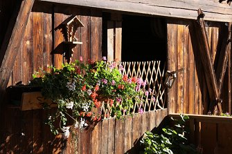 Stadlerhof  - Brixen - Farm Holidays in South Tyrol  - Eisacktal