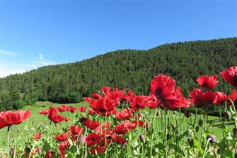 Oberstufelshof  - Kastelruth - Farm Holidays in South Tyrol  - Dolomites