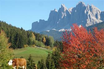 Unterpiskoi  - Villnöss - Farm Holidays in South Tyrol  - Dolomites