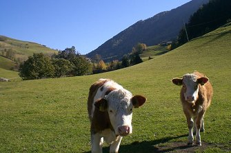 Tschampertonhof  - Villnöss - Farm Holidays in South Tyrol  - Dolomites