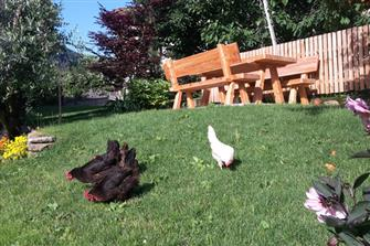 Oberhebsackerhof  - Algund - Farm Holidays in South Tyrol  - Meran and surroundings