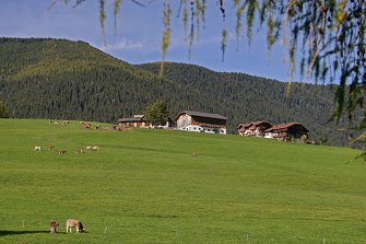 Unterguggenberg  - Welsberg-Taisten - Farm Holidays in South Tyrol  - Dolomites