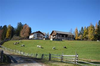 Bachnerhof - Petersberg  - Deutschnofen - Farm Holidays in South Tyrol  - Dolomites
