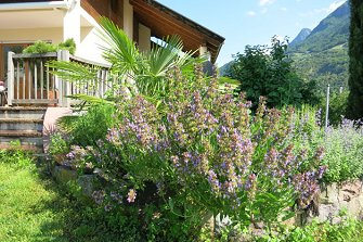 Feldererhof  - Burgstall - Farm Holidays in South Tyrol  - Meran and surroundings