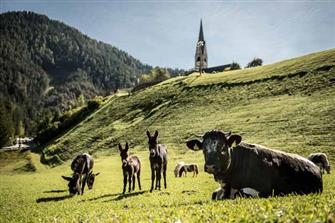 Ciasa Pradel  - St. Martin in Thurn - Farm Holidays in South Tyrol  - Dolomites