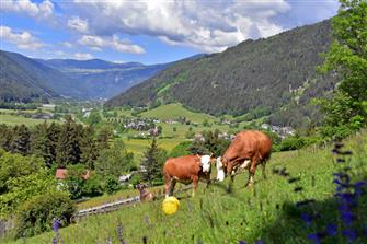 Rasteinerhof  - Kiens - Farm Holidays in South Tyrol  - Dolomites