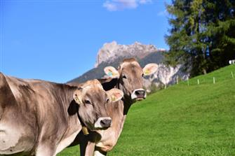 Planatschhof  - Villnöss - Farm Holidays in South Tyrol  - Dolomites