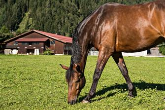 Ferienhof Thumburg  - Freienfeld - Farm Holidays in South Tyrol  - Eisacktal