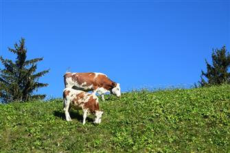 farm-reviews - Hütterhof  - Algund - Farm Holidays in South Tyrol  - Meran and surroundings