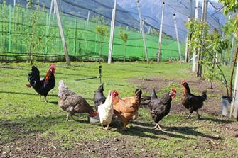 farm-reviews - Schötzerhof  - Lana - Farm Holidays in South Tyrol  - Meran and surroundings