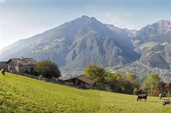 farm-reviews - Oberbrunnhof  - Partschins - Farm Holidays in South Tyrol  - Meran and surroundings