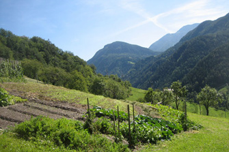 Buchnerhof  - Lajen - Farm Holidays in South Tyrol  - Dolomites