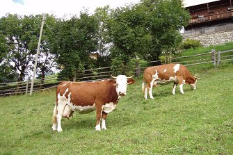 Niedristhof  - Percha - Farm Holidays in South Tyrol  - Dolomites