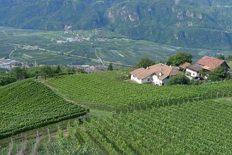 Oberlegar  - Terlan - Farm Holidays in South Tyrol  - Bozen and surroundings