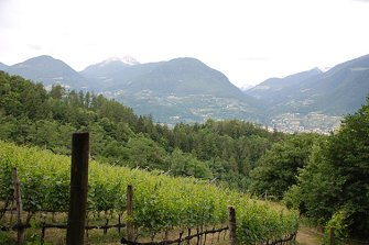 Rauthof  - Meran - Farm Holidays in South Tyrol  - Meran and surroundings