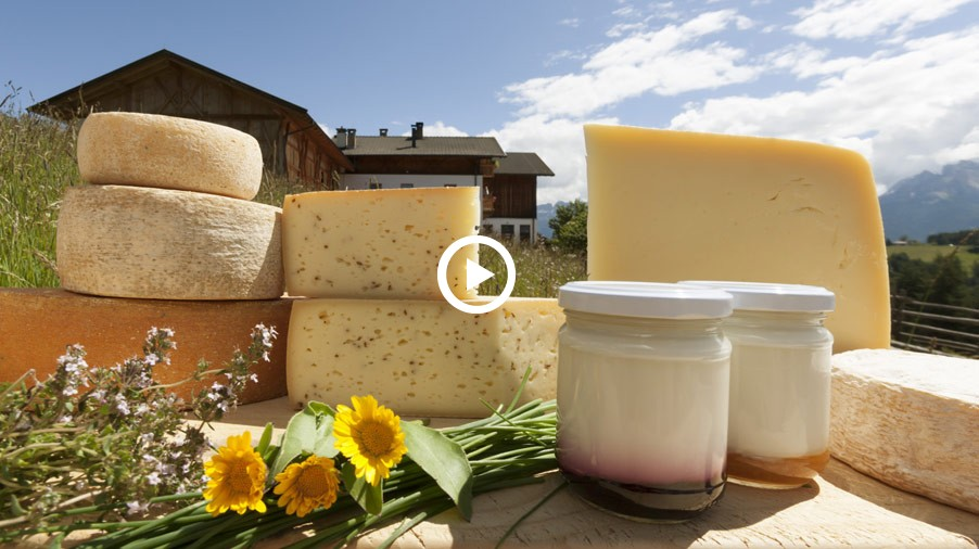 Video: Dairy production
